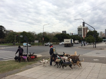 It seems 'porteños' love to have dogs but are not crazy about walking them so you'll see dog walkers everywhere