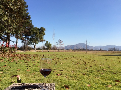 Chilean Carmenere wine with a view of the Andes!
