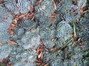 ... succulents!