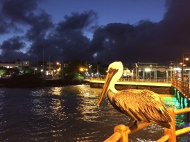 A pelican using the pier's lights to catch fish