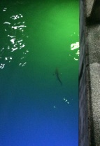 At night, blacktip reef sharks are attracted by Puerto Ayora's pier lights