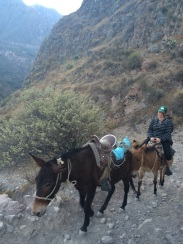 The mules brought back a few hikers that struggled with the altitude