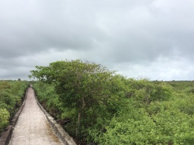 The path to 'Tortuga Bay' made out of local volcanic rock, takes you right through dense vegetation