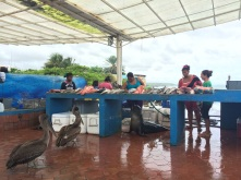 Some non-paying customers at the fish market in Puerto Ayora