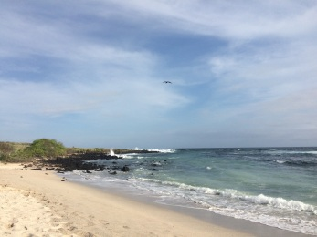 'Playa La Loberia' in San Cristobal. You can spot a magnificent frigatebird in the sky