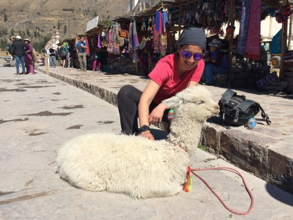 Snapping pictures with baby alpacas are a popular way to ask tourists for a 'propina'