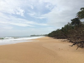One of the many desert and idyllic beaches we found in Bocas Del Toro. This one is 'Playa Bluff'