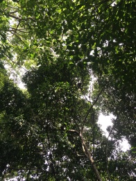 There are (at least) three howler monkeys in this picture. Can you spot them?