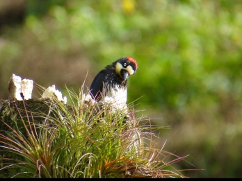 We saw a bunch of other cool birds in the trail, like this woodpecker (photo courtesy of Beyond Adventure Tours)