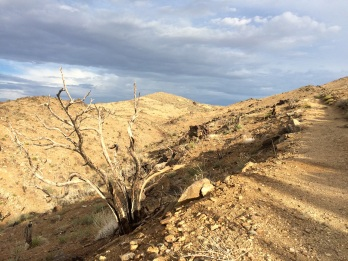 Not much vegetation growing around the Lost Horse Mine
