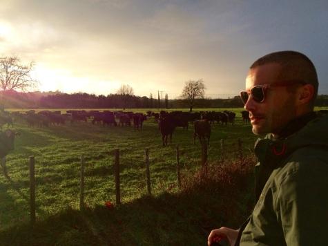 Verne considers future career opportunities in herding