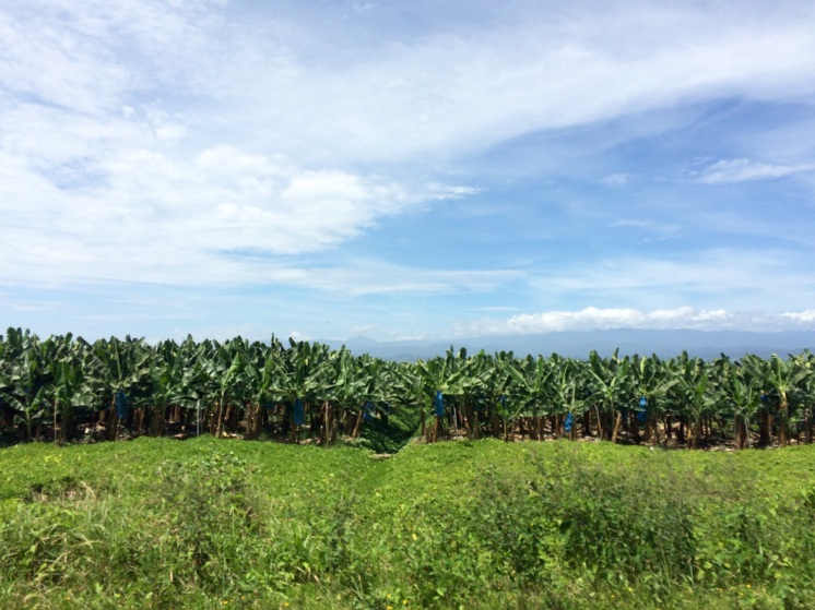 Chiquita (the country's largest company) has a bunch of plantations on the Panama-Costa Rica border. Most probably you already ate bananas from here!