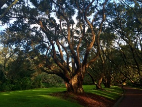 The Auckland Domain is the city's largest park...