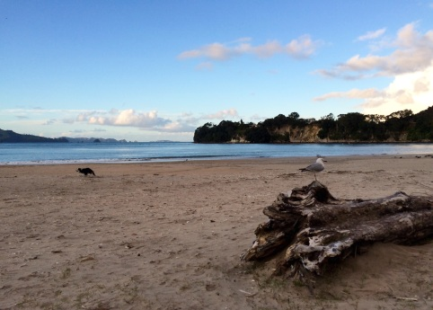 A cold morning in Whitianga Beach (the dog didn't seem to mind though, he went straight into the water after this photo)