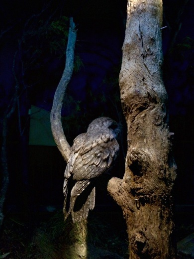 Shadowed by the dark, this beautiful owl poses for the photo (the Exorcist way they turn their head freaks me out though)
