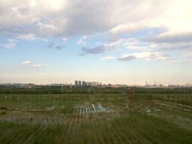 In our way to Xi'an, we caught a glimpse of modern Beijing across a stretch of old China rice fields