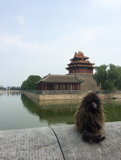 Our nephew's stuffed kiwi takes a selfie near the Forbidden City moot