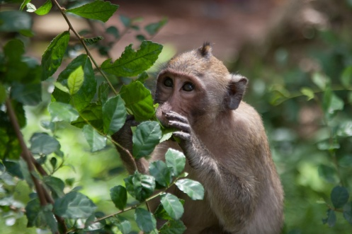 Cheeky monkey!