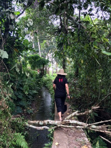 Jules travels alongside an irrigation canal for rice fields