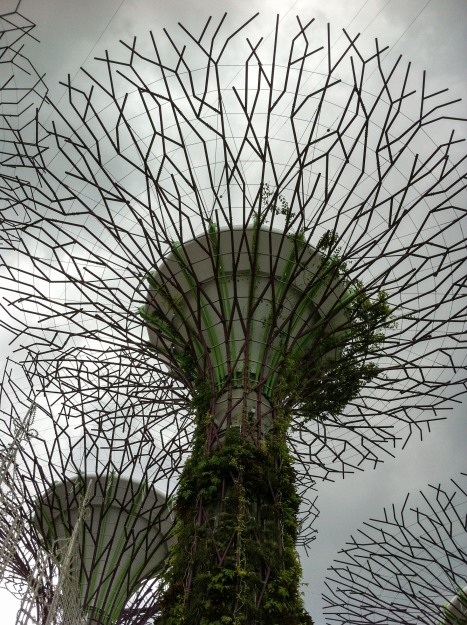 "Here's a picture of one of those ""super trees"" seen from below (photo credits: Ricardo Trindade)"