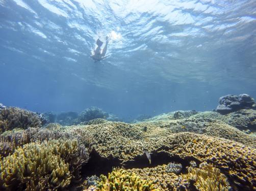 Jules at the Bunutan coral reef