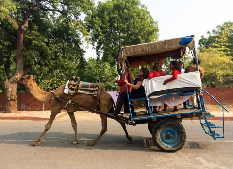 Visitors arrive to the Taj Mahal in style
