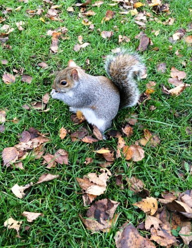 An obese squirrel at St. James' Park, London, UK (4.15mm, 1/120s, f2.2, ISO 50, iPhone)