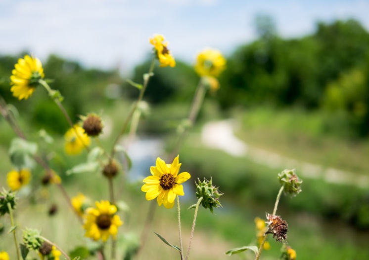 The River Walk, San Antonio, Texas (35mm, 1/5000s, f2, ISO 200)
