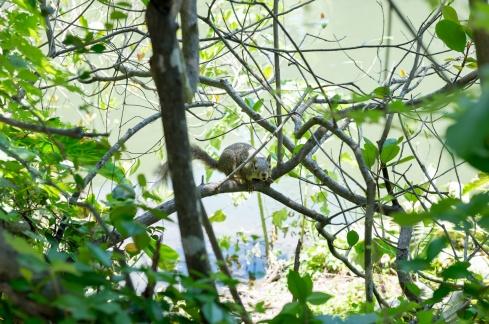 A squirrelly squirrel, San Antonio, Texas (35mm, 1/140s, f4, ISO 200)