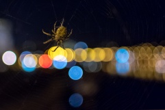 A plague of spiders at Štefánikův bridge, Prague (16mm, 1/60s, f1.4, ISO 5000)