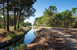 Irrigation canal near Maria Vinagre, Portugal (16mm, 1/450s, f5.6, ISO 200)