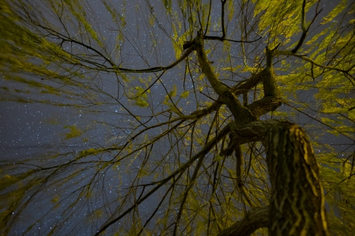 Weeping willow tree at night (16mm, f1.4, 20s, ISO 1250)