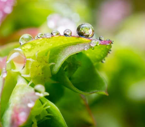 Morning dew (reversed 28mm @ 1.2x magnification, diffused flash, f16, 1/125s, ISO 200)