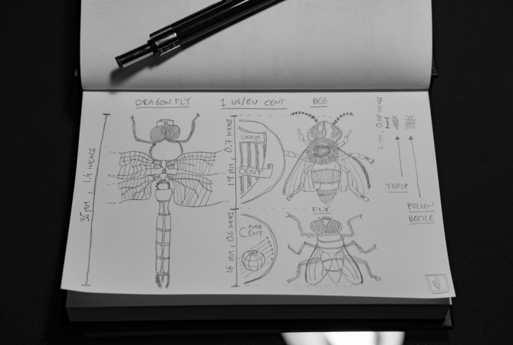 A size comparison of the photographed insects, from the apparently huge dragonfly to the positively tiny pollen beetle
