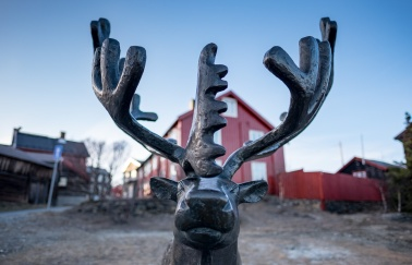 Røros is also known for reindeer herding (16mm, f1.4, 1/1400s, ISO 200)