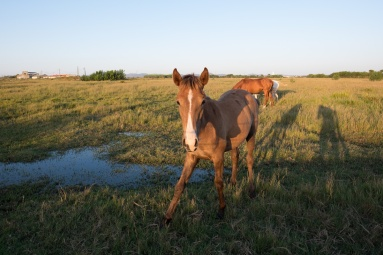 Before: Young horse at Almograve, Portugal (16mm, 1/140s, f5.6, ISO 200, PPL0-Raw)