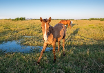 After: Young horse at Almograve, Portugal (16mm, 1/140s, f5.6, ISO 200, PPL3-Altered)