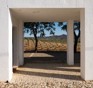 Marmelar, Portugal (16mm, f10, 1/420s, ISO 200, PPL3-Altered)