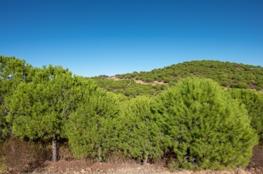 Near Balurcos, Algarve, Portugal (16mm, f7.1, 1/450s, ISO 200, PPL1-Corrected)