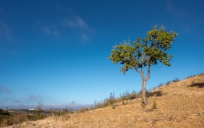 Near Furnazinhas, Algarve, Portugal (16mm, f9, 1/350s, ISO 200, PPL1-Corrected)
