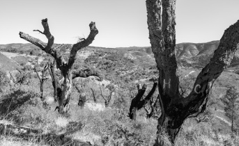 Burnt cork trees near Cachopo, Algarve, Portugal (16mm, f6.4, 1/400s, ISO 200, PPL2-Enhanced)