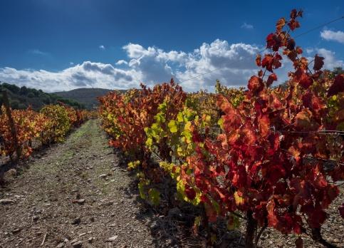 Vineyard near Barão de São João, Algarve, Portugal (16mm, f8, 1/420s, ISO 200, PPL1-Corrected)