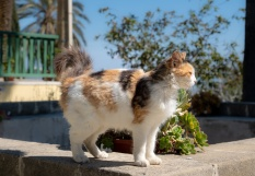 Care-free cat at the Hala Sultan Tekke Mosque, Larnaca Salt Lake, Cyprus (45mm, f5.6, 1/800s, ISO 200, PPL1-Corrected)