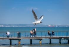 Larnaca Promenade, Larnaca, Cyprus (122mm, f5.6, 1/1700s, ISO 200, PPL1-Corrected)