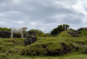 Pico, Azores (60mm, f5.6, 1/550s, ISO 100, PPL1-Corrected)