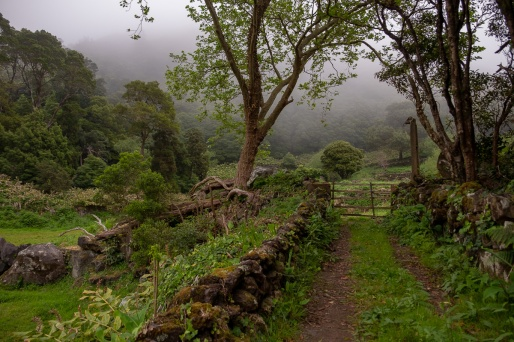 Path to Poço da Alagoinha, Flores, Azores (18mm, f3.5, 1/140s, ISO 200, PPL1-Corrected)