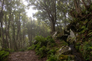 Path to Poço da Alagoinha, Flores, Azores (3-picture composite, 18mm, f3.5, 1/210s, ISO 200, PPL2-Enhanced)