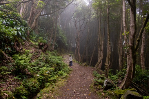 Path to Poço da Alagoinha, Flores, Azores (3-picture composite, 18mm, f3.5, 1/90s, ISO 200, PPL2-Enhanced)
