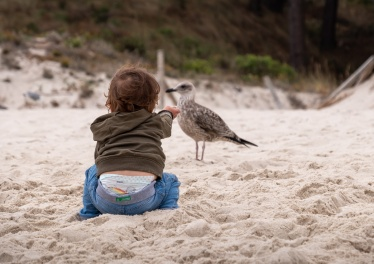Gabriel offering sand to a juvenile yellow-legged gull (Larus michahellis), Cíes Islands, Spain (PPL1-Corrected)