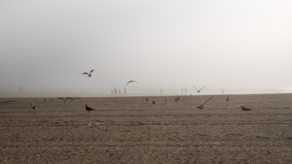 Gulls at Praia América on a foggy afternoon, Galicia, Spain (PPL3-Altered)